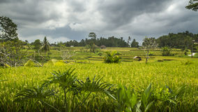 Ansicht von Reisfeldern in Bali Lizenzfreie Stockfotos