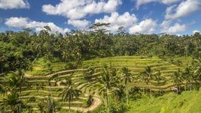 Ansicht von Reisfeldern in Indonesien Stockbild