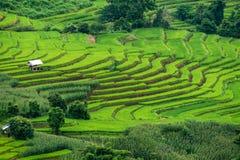 Ansicht von Reisterrassen an Bong Piang-Wald in Chiang Mai, Thailand stockbilder