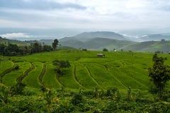Ansicht von Reisterrassen am regnerischen Tag an Bong Piang-Wald in Chiang Mai, Thailand lizenzfreie stockfotografie