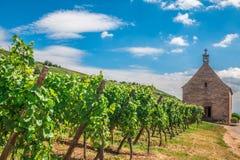 Ansicht von Riquewihr-wineyard in Elsass in Frankreich Lizenzfreie Stockfotografie