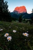 Ansicht von Sassolungo mit einigen Blumen im forground lizenzfreie stockfotos