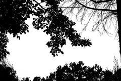 Ansicht von Schattenbildbäumen Stockbild