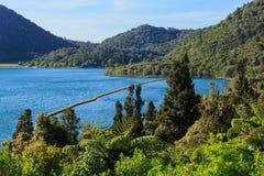Ansicht von See Tikitapu, Neuseeland, von einem nahe gelegenen Hügel lizenzfreie stockfotografie