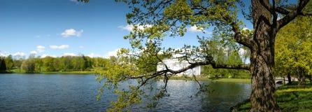 Ansicht von Sommer Landschaft mit See und Baum stockfotografie