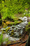 Ansicht von steinigem Fluss mit kleinen Wasserfällen im Walddickicht Stockfotografie