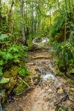 Ansicht von steinigem Fluss mit Wasserfall im Walddickicht Lizenzfreie Stockfotografie