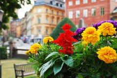 Ansicht von Stockholm mit Blumen im Vordergrund Stockfoto