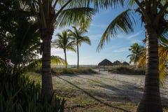 Ansicht von strandnahem gesehen durch Palmen mit Sonnenschutz und stockbild
