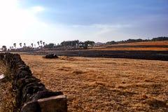 Ansicht von Tangerineschalen ausgebreitet auf dem Feld, um an einer Ranch in Jeju-Insel, Südkorea zu trocknen lizenzfreie stockfotos