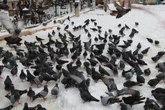 Ansicht von Tauben mit Schnee vor Eyup Sultan Mosque Stockfotos