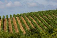 Ansicht von Toskaner-Feldern und -hügeln in Maremma-Region in Italien Lizenzfreie Stockfotografie