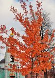 Ansicht von Tsaritsyno-Park in Moskau Ein Baum bedeckt durch orange Blätter lizenzfreie stockbilder