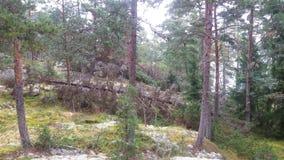 Ansicht von unserem Archipel und von seinem Wald Lizenzfreie Stockfotografie