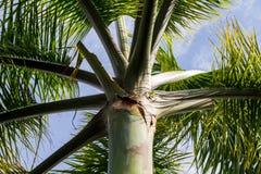 Ansicht von unten der Palme stockbilder