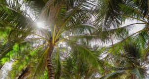 Ansicht von unten der Palme stock video footage