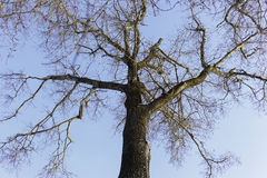 Ansicht von unten des Baums Lizenzfreie Stockfotografie