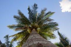 Ansicht von unten einer schönen Palme mit blauem Himmel lizenzfreie stockbilder