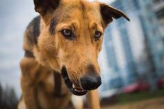 Ansicht von unten am glücklichen nicht reinrassigen Hund mit Stellung und Betrachten der Kamera lizenzfreie stockbilder