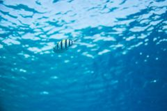 Ansicht von unten, Oberfläche und Fische im blauen Underwater lizenzfreie stockfotos