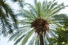 Ansicht von unten von Palmen darunter stockfotos