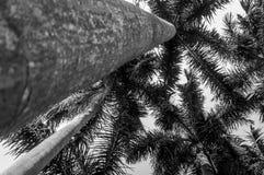 Ansicht von unten unter Palmeerhöhung auf klarem Himmel stockfotografie