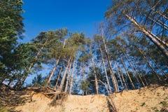 Ansicht von unten von Bäumen im Sommerwald Stockfotos