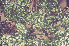 Ansicht von unten von Blättern Stockfotos