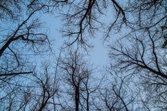 Ansicht von unten von den Bäumen und von Niederlassungen umfasst mit Schnee Lizenzfreie Stockfotografie