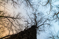 Ansicht von unten von den Bäumen und von Niederlassungen umfasst mit Schnee Lizenzfreie Stockfotos