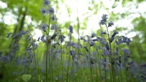 Ansicht von unten zwischen Blumen stock video footage