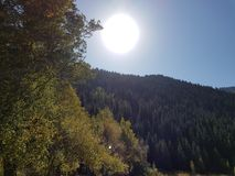 Ansicht von unterhalb über die Kronen von hohen beständigen Kiefern auf Hintergrund des blauen Himmels und der Sonne lizenzfreies stockbild