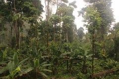 Ansicht von Unterwasserbananen im Dschungel mit vielen Wolken oder Nebel lizenzfreie stockbilder