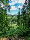 Ansicht von Wald zu Wald Stockbilder