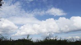 Ansicht von weißen flaumigen Wolken im Himmel Grünes Gras nave Sonniger Tag Timelapse stock footage