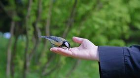 Ansicht von woman s Hand, die Korn hält und Vögel einzieht stockbilder