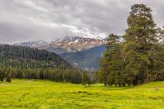 Ansicht zu den Vorbergen des Kaukasus über Blumenfeld darunter Lizenzfreie Stockfotografie