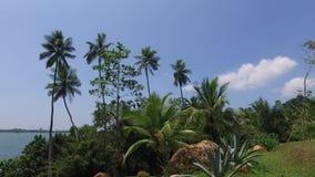 Ansicht zum Ozean von Sri Lanka-Insel mit Palmen stock video footage