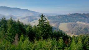 Ansicht zum schwarzen Wald nahe Oberkirch stockbild
