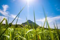 Ansichten über die Berge, die Felder und die Täler in der europäischen Alpe Lizenzfreies Stockbild