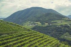 Ansichten der Alpen und der Weinberge in Italien Stockfoto