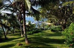 Ansichten des einsamen Strandes von Sri Lanka durch die Palmen Stockbild