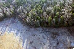 Ansichten des Feld- und Tannenwaldes von der Vogelaugenansicht von einem heißen lizenzfreies stockfoto