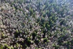 Ansichten des Feldes und des Tannenwaldes und der -bäume von der Vogelaugenansicht stockbild