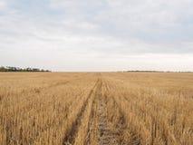 Ansichten eines Feldes mit Stoppel, Herbstlandschaft mit Skylinen und drastischem Himmel Natur, ländliche Ansicht des hübschen Ac Stockfotos