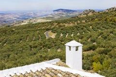 Ansichten eines Olivenhains Lizenzfreie Stockfotografie