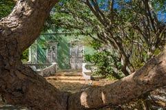 Ansichten um Scharloo - alter Baum Lizenzfreie Stockfotografie