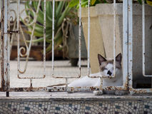 Ansichten um Scharloo - Katze Lizenzfreie Stockbilder