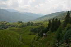 Ansichten von grünen terassenförmig angelegten Feldern, das Rückgrat China des Drachen stockfotografie