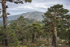 Ansichten von Navacerrada-Skiort Lizenzfreie Stockbilder